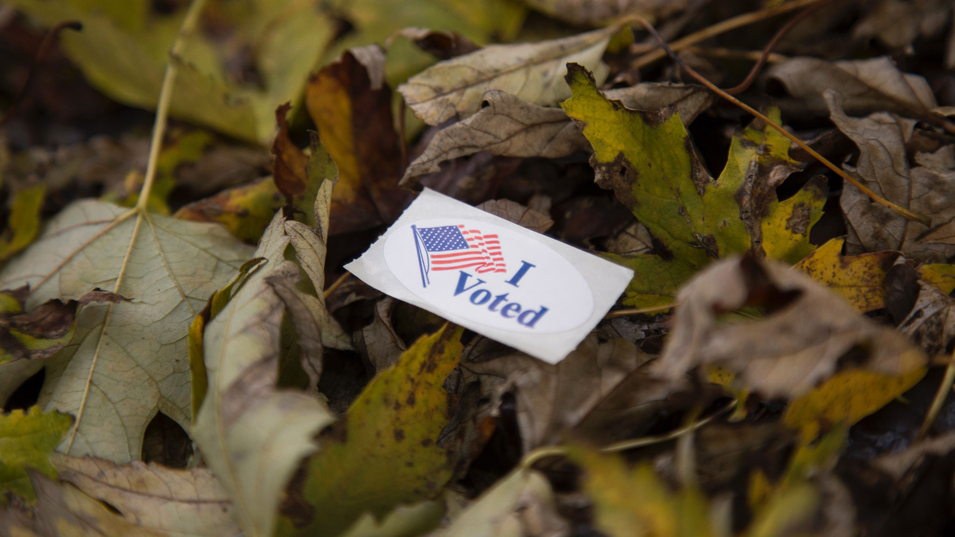 "An ""I voted"" sticker on a bed of leaves"